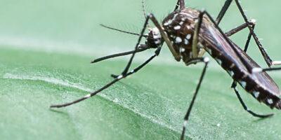 It's Mosquito Season!